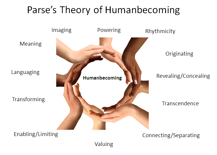 parse s theory of human becoming