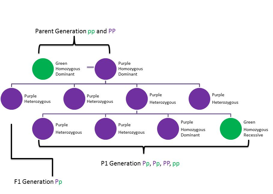 Generation Brassica, (Genetics project): text, images, music, video